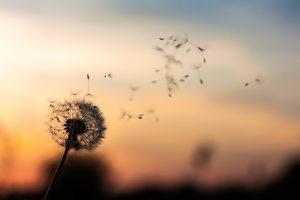 article-respiration-flore-desseaux-cabinet-sophrologie-le-mans